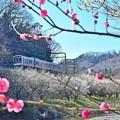 Photos: 春色沿線(26)