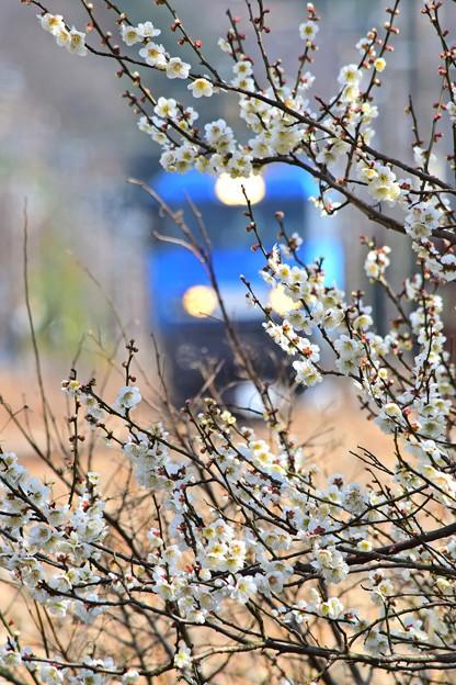 春色沿線(27)
