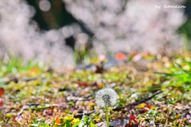 春色彩々…♪♪