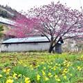 Photos: 春色沿線(28)