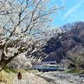 Photos: 高尾梅郷