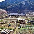 Photos: 春色沿線(29)