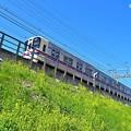 Photos: 春色沿線(30)