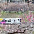 Photos: 春色沿線(32)