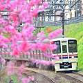Photos: 春色沿線(33)