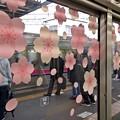 Photos: 桜窓