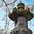 枝垂れ桜と石灯籠