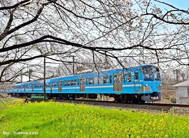 Photos: 春色沿線(34)