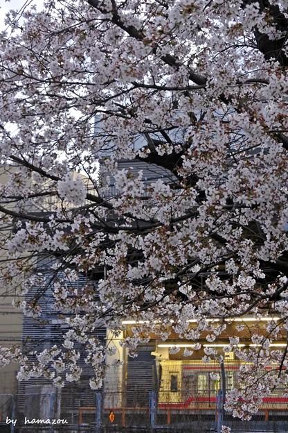 夕暮れ桜の駅