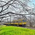 Photos: 春色沿線(35)