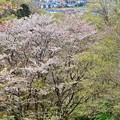 Photos: 春色沿線(37)