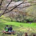 春の丘陵(1)
