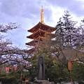Photos: 夕暮れ五重塔