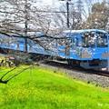 Photos: 春色沿線(38)