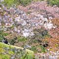 春の丘陵(2)