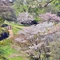 春の丘陵(3)