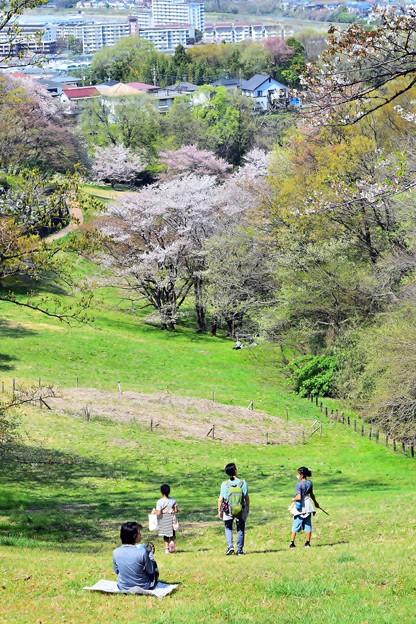 春の丘陵(4)