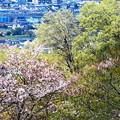 Photos: 春色沿線(40)