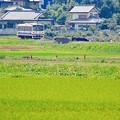 Photos: 盛夏の記憶