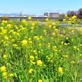 春色沿線(43)