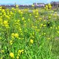 春色沿線(44)
