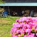 納屋のある畑