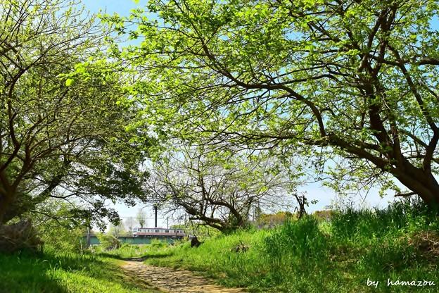 新緑初夏モード