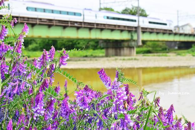 花咲く河川敷