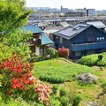 Photos: つつじ咲く沿線
