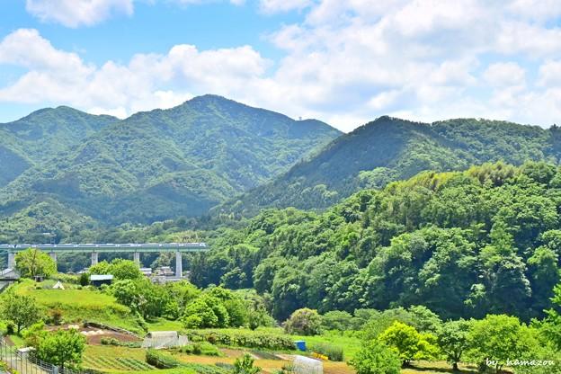 Photos: 新緑の中央本線