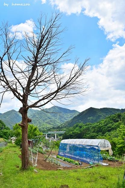 新緑の山郷