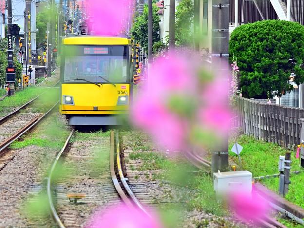 Photos: ★Happy Yellow Pink