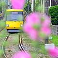 Photos: Happy Yellow Pink