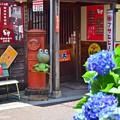 Photos: 昭和のアジサイ横丁