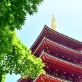Photos: あおもみじ