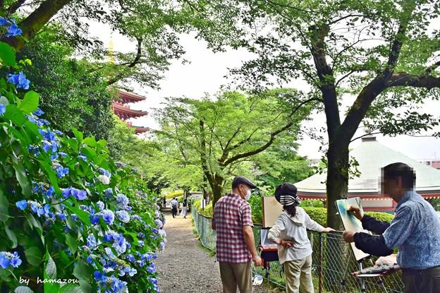 Photos: 紫陽花の小径