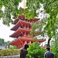 Photos: 青もみじと紫陽花