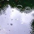 Photos: 梅雨の波紋