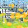 Photos: ふあふあ夏模様