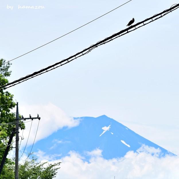 夏富士と鳥
