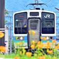 Photos: 夏色沿線(21)