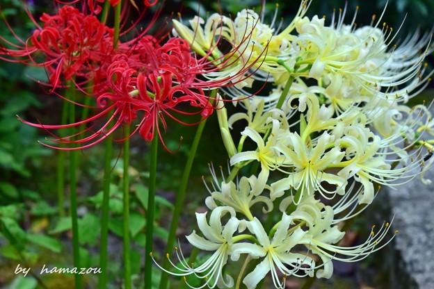 二つの彩花