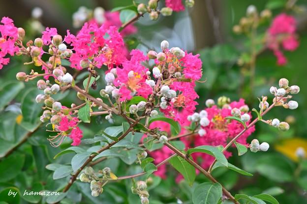 神社に咲く花