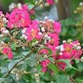 Photos: 神社に咲く花