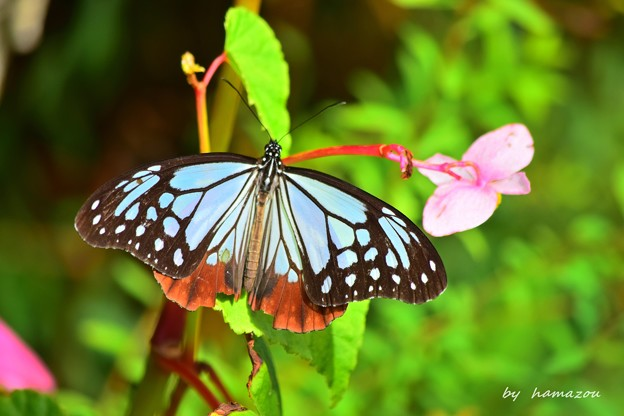 裏高尾の蝶