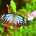 Photos: 裏高尾の蝶
