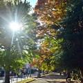 午後の街路地