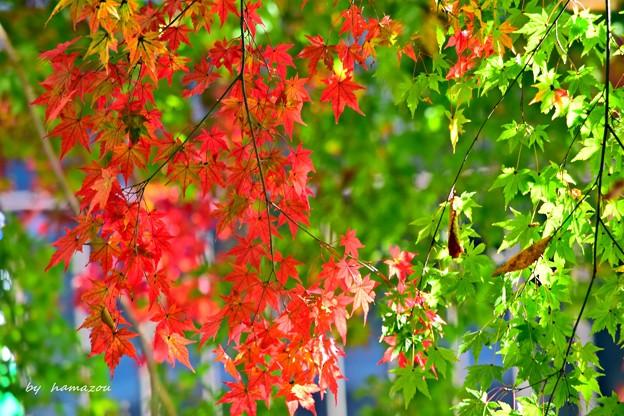 秋深まる彩り(1)