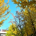 秋色沿線(77)