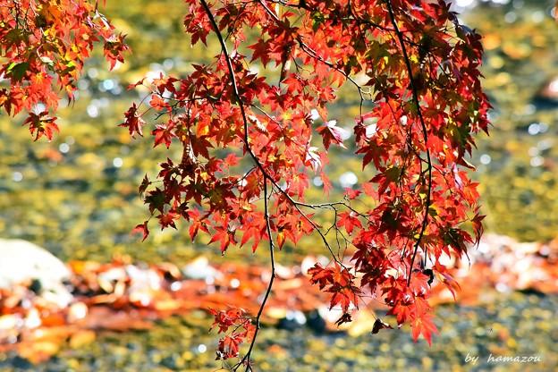 秋深まる彩り(2)